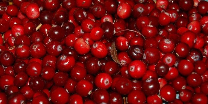 cranberries veenbessen